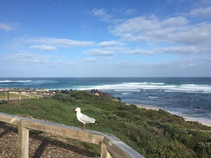 Prevelly Beach Lookout